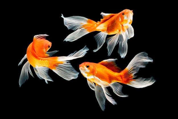 Blck背景で泳ぐ魚の群れ
