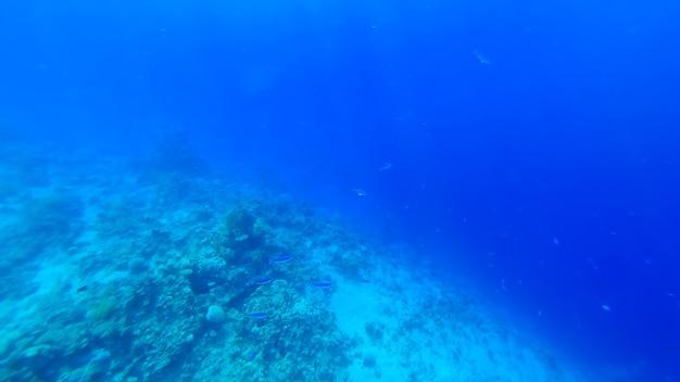 푸른 바다 깊은 곳에서 푸른 물고기 떼가 헤엄치고 있습니다.