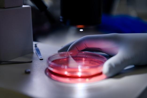 Ученый, работающий со световым стереомикроскопом, исследует культуру в чашке петри для исследования фармацевтической биологии.