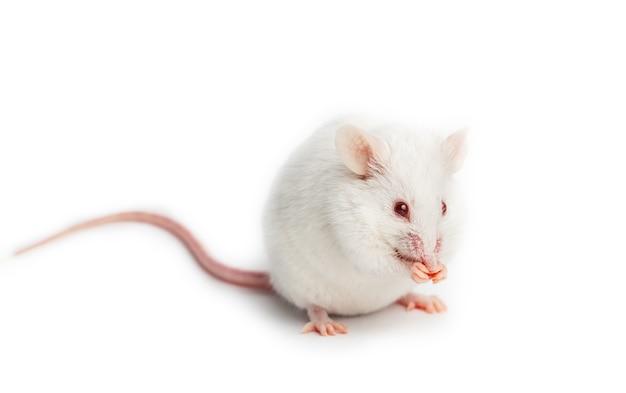 과학적 연구 개념, 동물에 대한 약물 테스트