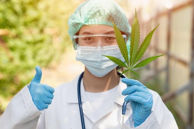 Ученый доктор недурно с подтверждением законности использования травы листьев растения sativa cannabis indica, тгк, в медицинской концепции.