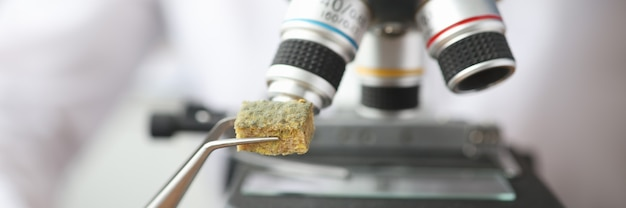 Ученый держит образец заплесневелой ткани возле микроскопа с пинцетом крупным планом биологический