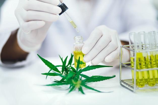 マリファナの植物から抽出されたcbdオイルを実験室でテストする科学者。医療大麻からのヘルスケア薬局。