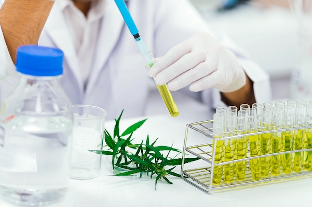 Scientist in laboratory testing cbd oil extracted