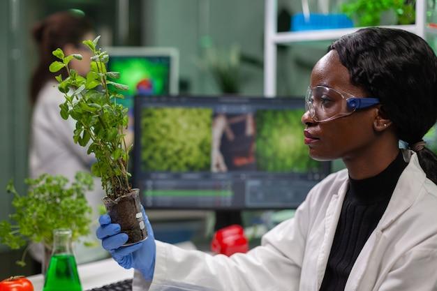 Scienziato che guarda un alberello verde per un esperimento medico