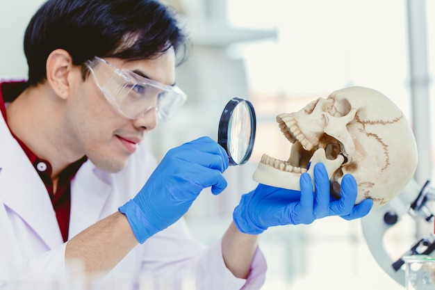 Scientist physical anthropology in biological science lab studying human bone looking