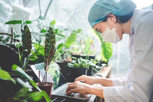 의학 실험실 온실에서 잎 식물의 농업에 대한 과학자 연구, 자연 농장에서 약을 위해 사는 대마 또는 허브 꽃봉오리