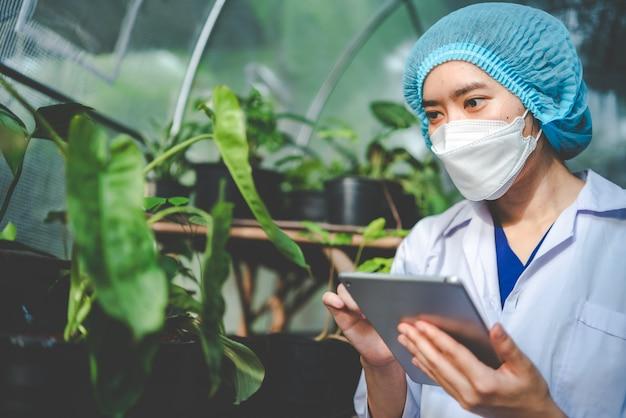 医学研究所の温室での葉の植物の農業の科学者の研究、薬のための自然農場に住む麻またはハーブの芽、植物学の産業のための有機花畑の成長