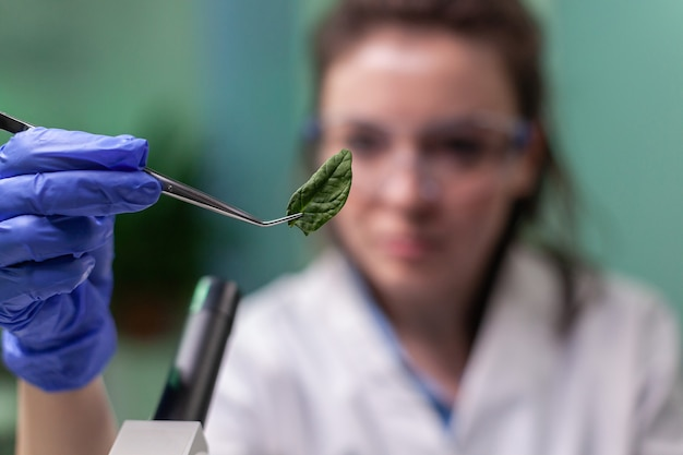 Scientist researcher examining genetically modified green leaf under microscope