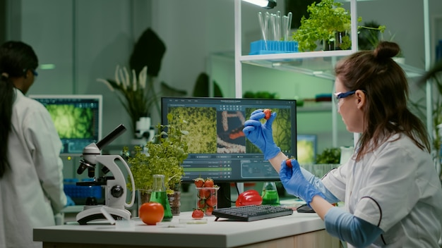 Scientist researcher injecting strawberry with pesticides