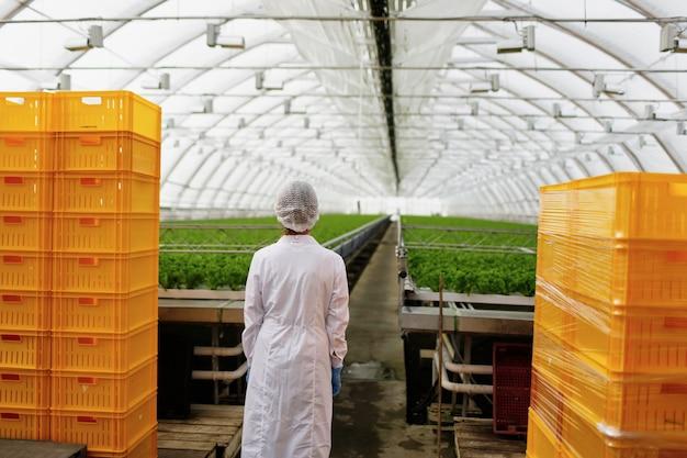 Scienziato che ricerca piante e malattie in serra
