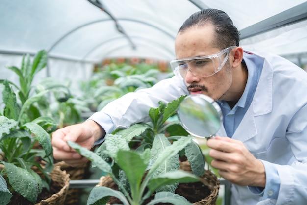 생물학 과학 실험실 온실에서 농업 녹색 식물을 연구하기 위해 일하는 과학자, 의료 식품 생명 공학에 대한 유기 실험 테스트, 농업 성장에 있는 식물학 생태 생물학