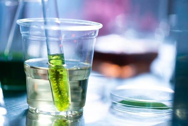 Scientists are developing research on algae
