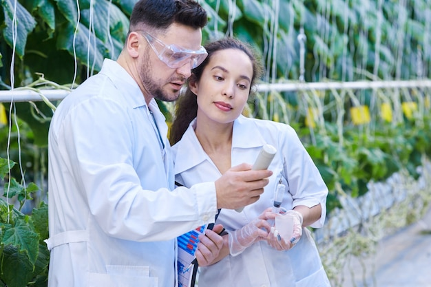 Scientists checking quality of vegetables in plantation