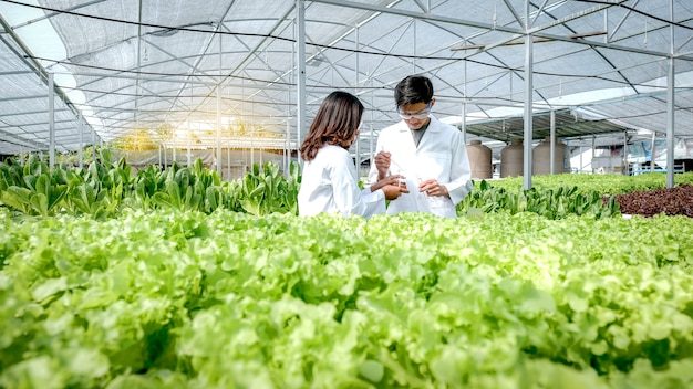 Scientists examined the quality of lettuce from the farmers hydroponic farm