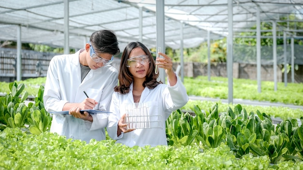 Scientists examined the quality of lettuce from hydroponic farm and recorded them in the clipboard