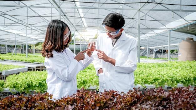 과학자들은 농부들의 수경 농장에서 수확한 유기농 야채 샐러드와 양상추의 품질을 조사했습니다.