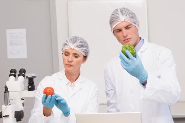 緑色のペッパーとトマトを注意深く調べる科学者
