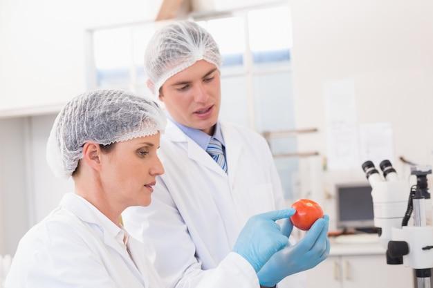 トマトを注意深く調べる科学者