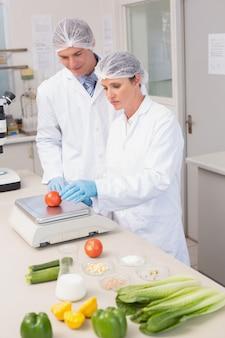 トマトの重量を量る科学者
