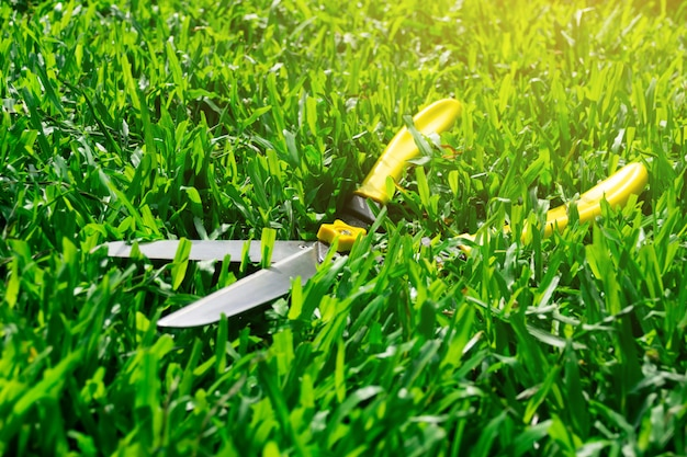 Scissors cut the grass on the lawn