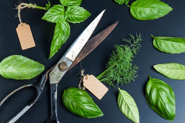 Forbici con alcune erbe aromatiche