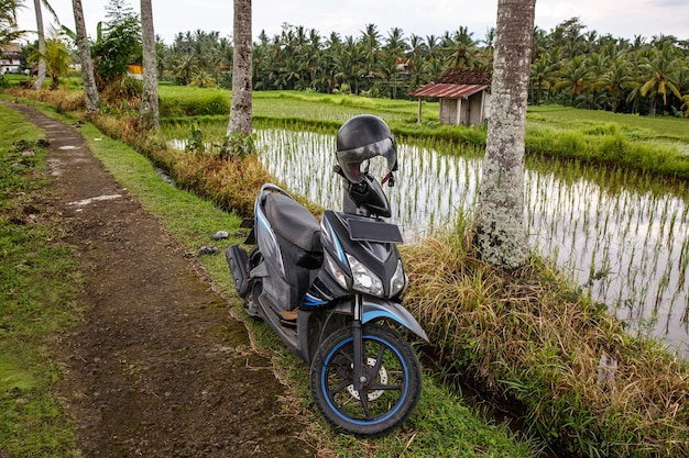 Scooter on a path in the balinese jungle.