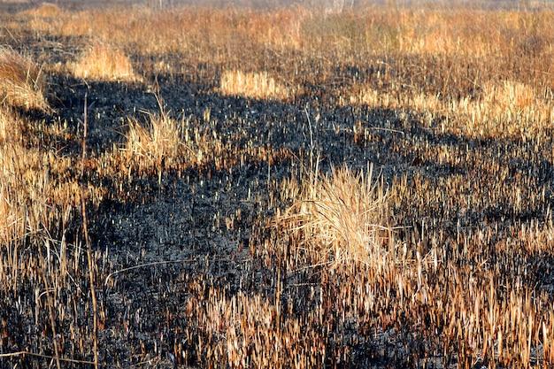 Сухая выжженная трава закрывает день, фильтр