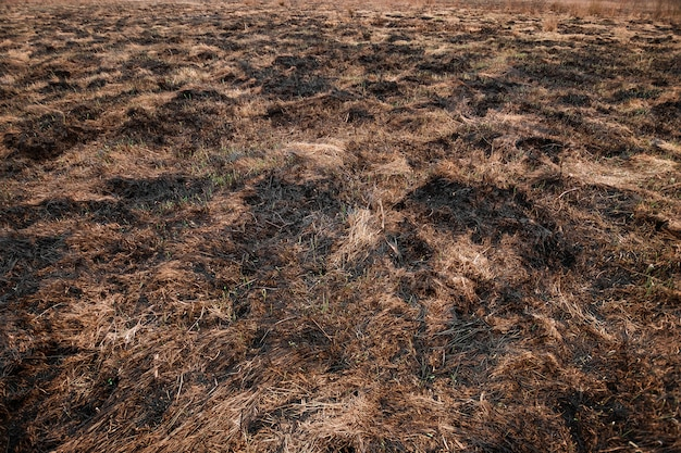 Scorched earth, spring fires