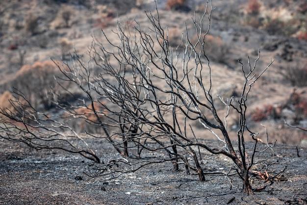 농촌 지역에서 산불 후 그을린 나무와 재로 덮인 땅