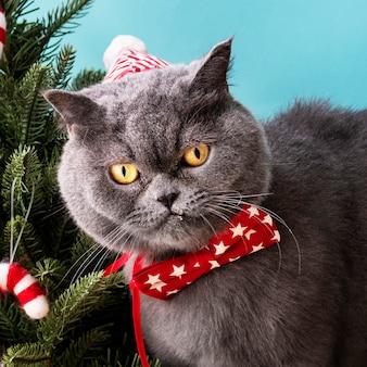 Шотландская вислоухая кошка с красным бантом, празднующим рождество