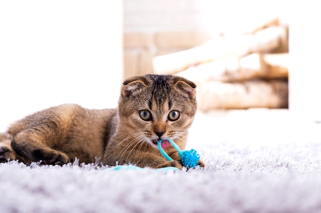 Котенок скоттиш-фолд играет с игрушкой на ковре у камина
