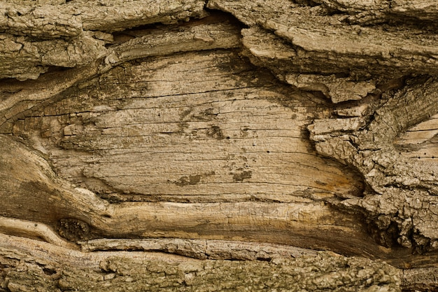Scraped to the trunk of the tree bark. copy space.