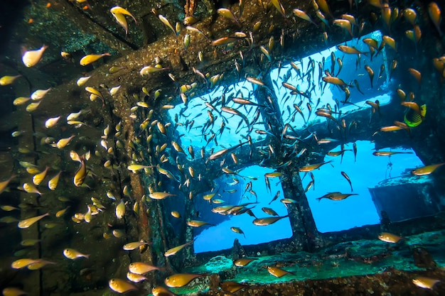 Scuba divers explore sunken ships at the bottom of the sea. marine life underwater in blue ocean. observation animal world. scuba diving adventure in red sea, coast africa