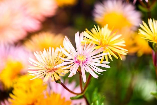 즙이 많은 꽃