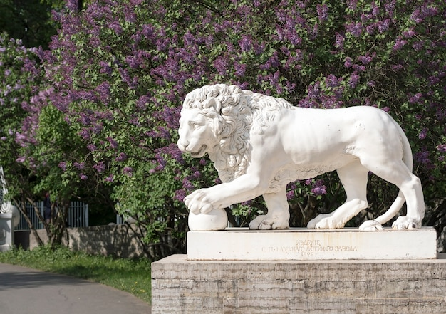Sculpture of a lion holding a ball paw on the background of lilac bushes . elagin island. saint-petersburg