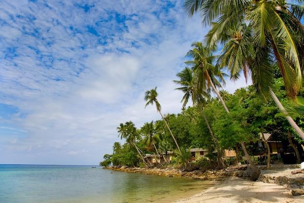 ココヤシの木と海とビーチ
