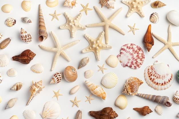 Морской фон с различными ракушками, моллюсками и морскими звездами на светлом фоне