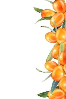 Облепиха, изолированные на белом. иллюстрация в 3d стиле. концепция реалистичного изображения лекарственных растений, трав.