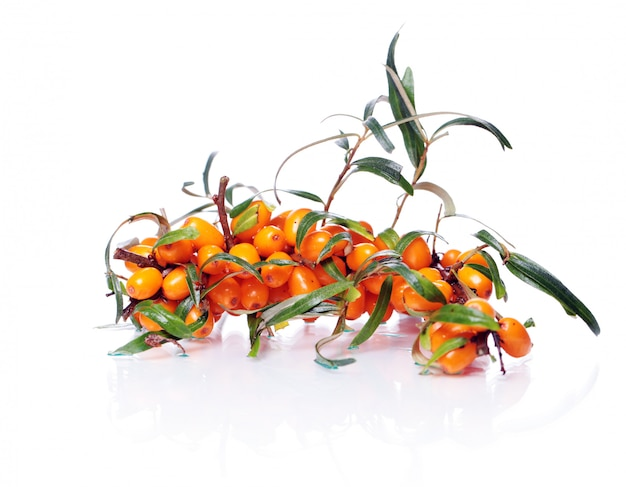 Sea buckthorn over white background