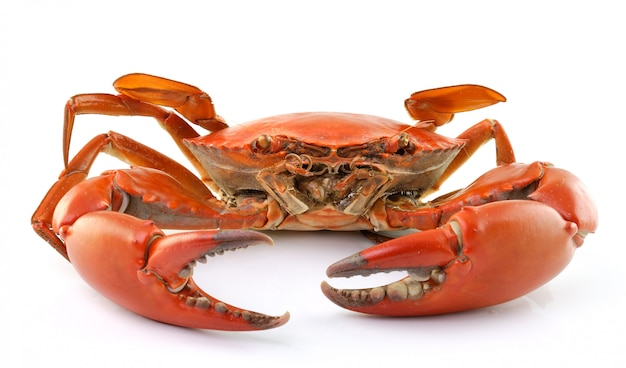Sea crab isolated isolated