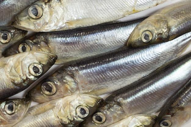 Sea fish herring close up