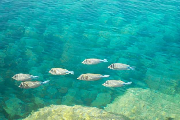 홍해 시나이 반도 이집트의 바다 물고기 자연 배경