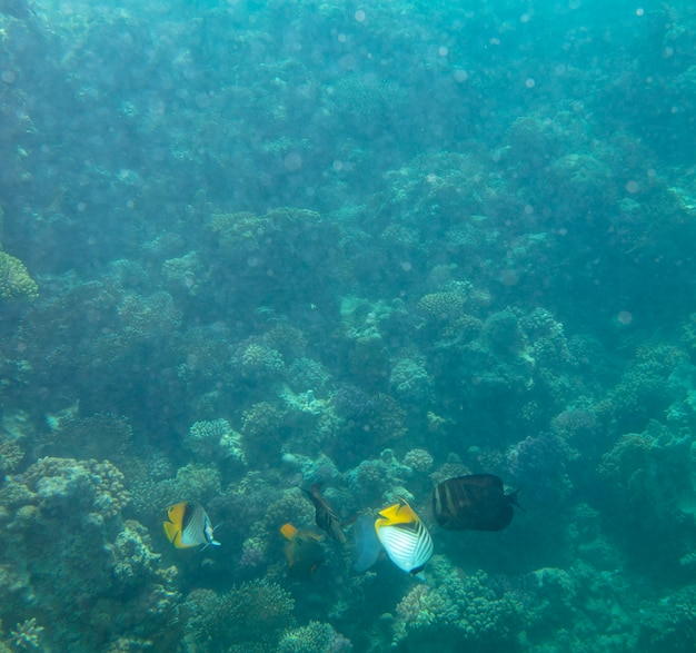 산호 수중 여름 배경 근처 바다 물고기