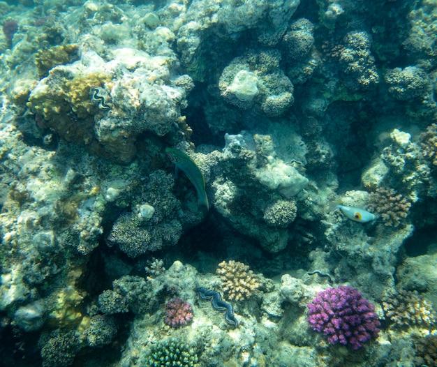 산호 근처 바다 물고기, 수중 여름 배경 프리미엄 사진