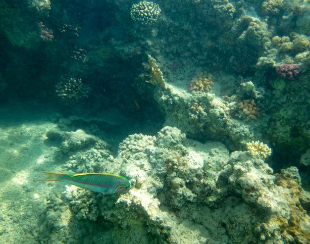 산호 근처 바다 물고기, 수중 여름 배경