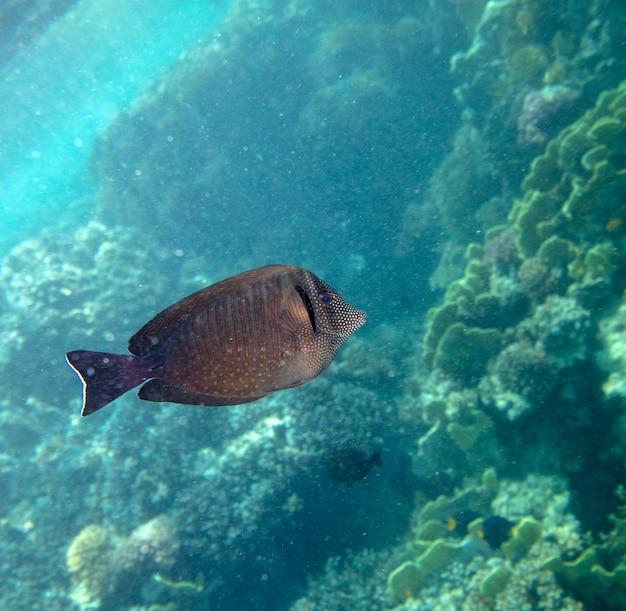 Морская рыба возле коралла под водой