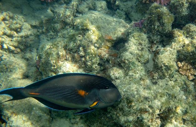 산호 수중 근처 바다 물고기