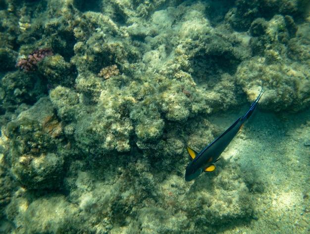 Sea fish near coral underwater