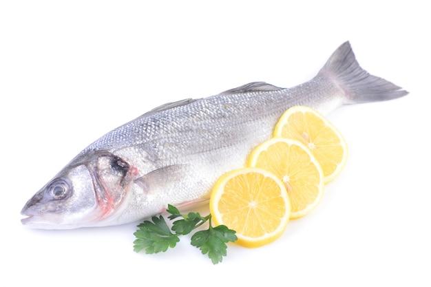 白い背景の上の海の魚